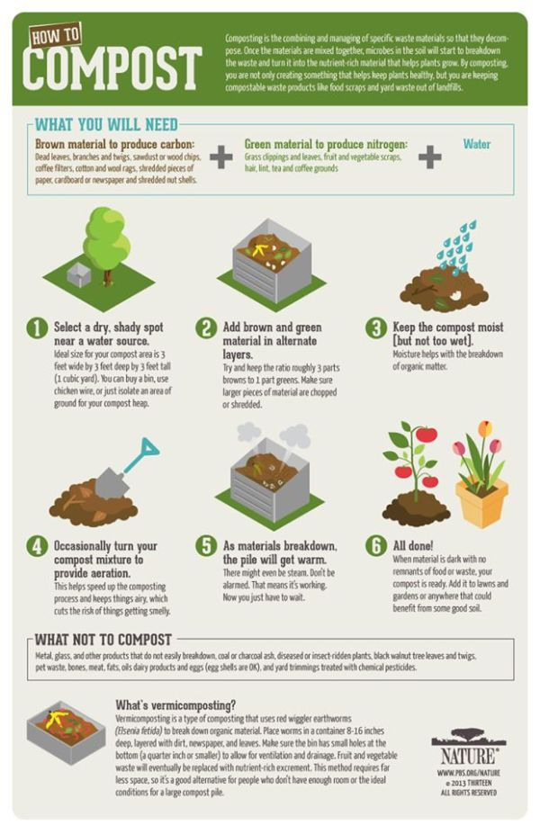 compost pile 101